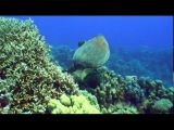 Жизнь морских обитателей / Fish Life/5-я серия. Коралловый театр